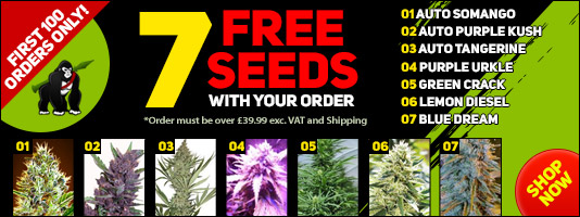 Feminised Seed Gift Pack This Month at Gorilla - Merry Xmas!