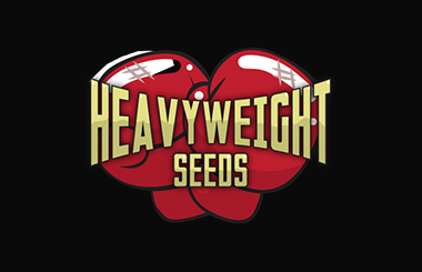 Heavyweight Seeds AutoFlowering