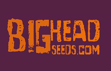 Big Head Seeds AutoFlowering