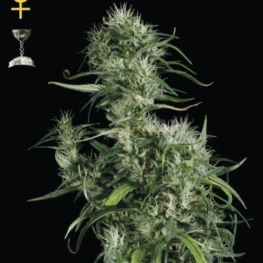 GreenHouse Seeds Nevilles Haze