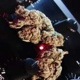 Easy Kush Feminized