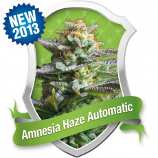 royal queen seeds amnesia haze automatic extremely fast