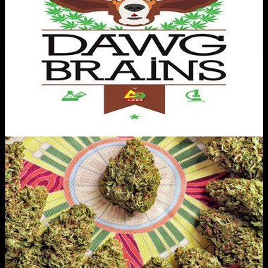 Dawg Brains