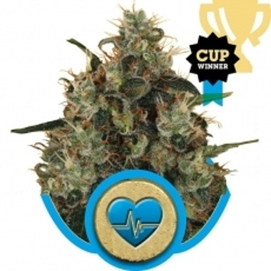 Medical Mass CBD