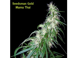 Mama Thai Regular Seeds
