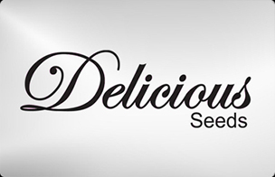 Delicious Seeds Feminized Seeds